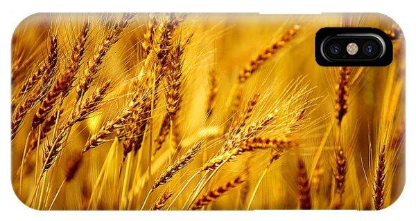 Bearded Barley IPhone Case