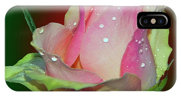 Beautiful Rose IPhone Case