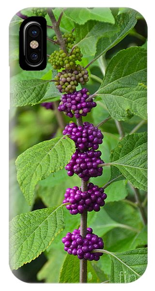 Beautyberry IPhone Case