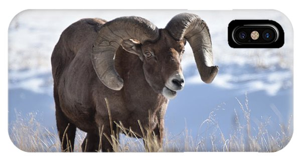 IPhone Case featuring the photograph Big Horn Sheep by Margarethe Binkley
