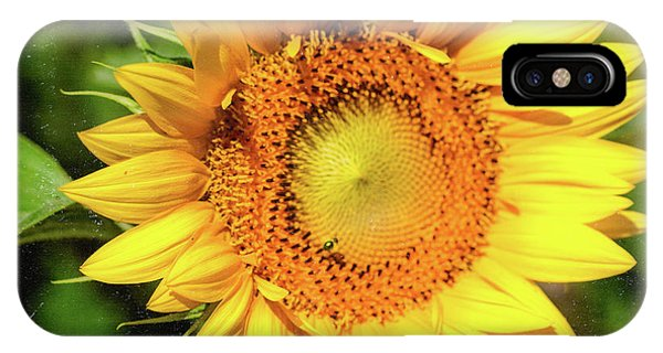 IPhone Case featuring the photograph Big Sunflower by Anna Louise