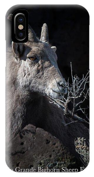 IPhone Case featuring the photograph Bighorn Ewe by Britt Runyon