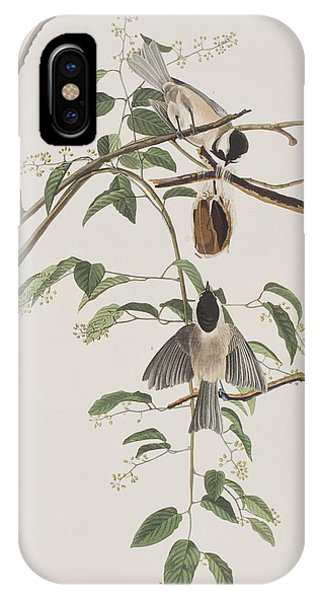 Titmouse iPhone Case - Black Capped Titmouse by John James Audubon