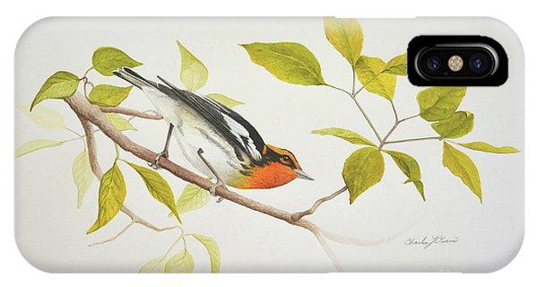 Blackburnian Warbler IPhone Case
