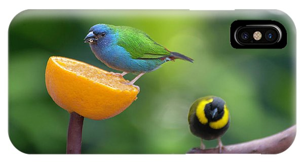 Blue-faced Parrotfinch IPhone Case