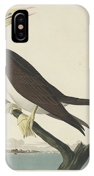 Boobies iPhone Case - Booby Gannet by Dreyer Wildlife Print Collections