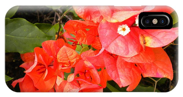 Bouganvilla 1 IPhone Case