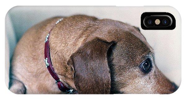 Brownie The Dachshund IPhone Case