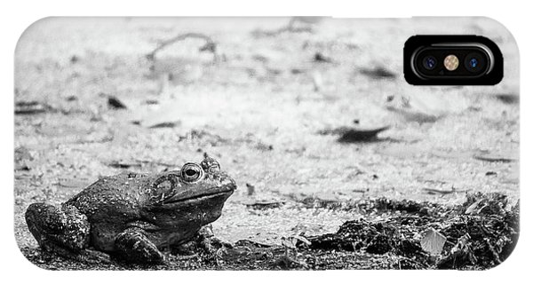 IPhone Case featuring the photograph Bull Frog by Jason Smith