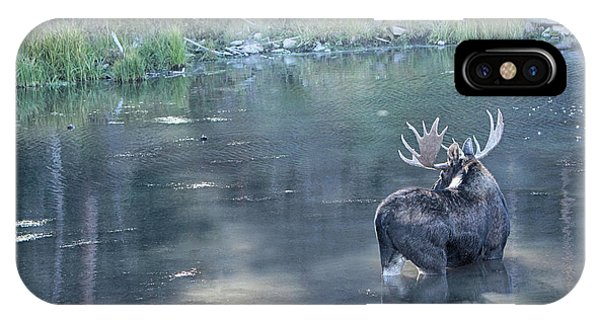 Bull Moose Reflection IPhone Case