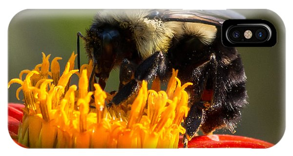 IPhone Case featuring the photograph Bumble Bee by Willard Killough III