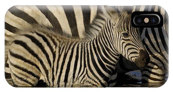 Burchells Zebra Equus Burchellii Foal IPhone Case