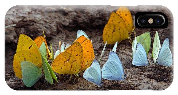 Butterflies Eating Minerals IPhone Case