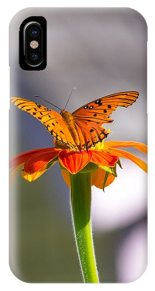 IPhone Case featuring the photograph Butterfly On Flower by Willard Killough III