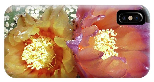 Cactus Flower 3 IPhone Case