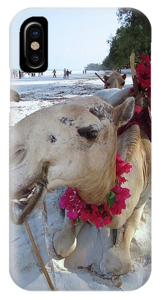 Camel On Beach Kenya Wedding3 IPhone Case