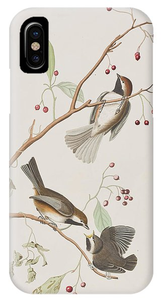 Titmouse iPhone Case - Canadian Titmouse by John James Audubon