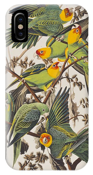 Carolina Parrot IPhone Case