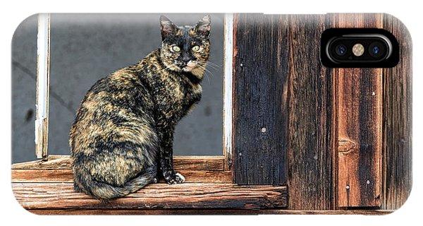 Cat In A Window IPhone Case