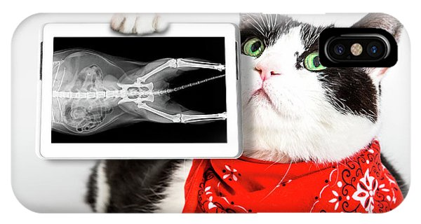 Cat With X Ray Plate IPhone Case
