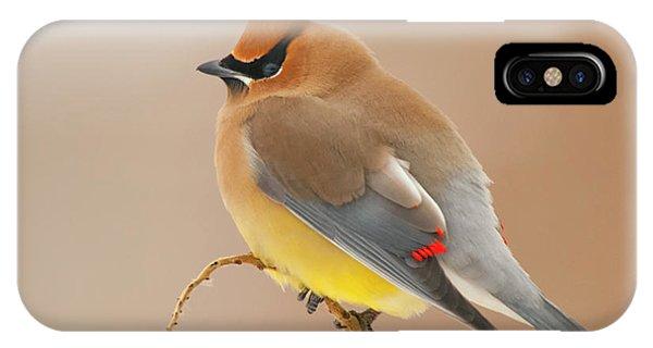 Cedar Waxing iPhone Case - Cedar Wax Wing by Carl Shaw