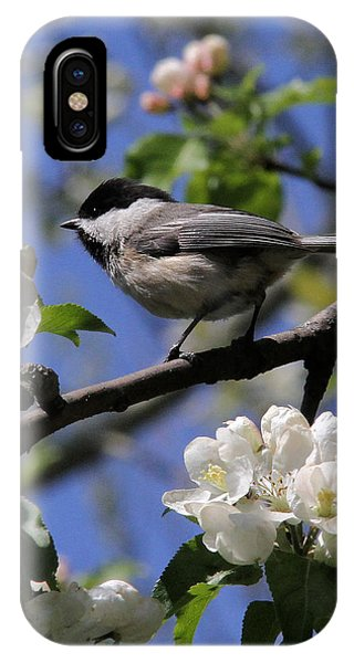 Chickadee Among The Blossoms IPhone Case