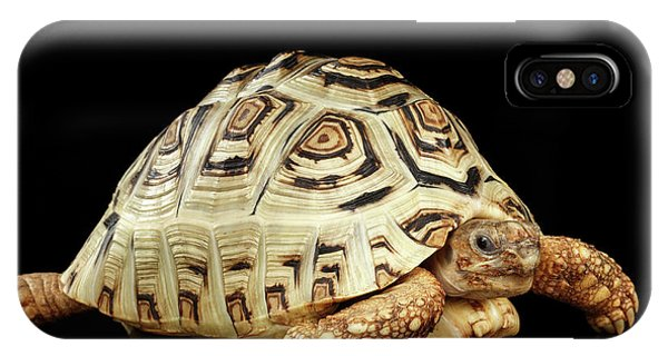 Closeup Leopard Tortoise Albino,stigmochelys Pardalis Turtle With White Shell On Isolated Black Back IPhone Case
