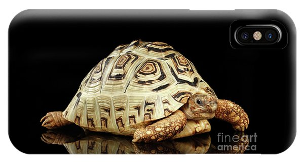 Closeup Leopard Tortoise Albino,stigmochelys Pardalis Turtle With White Shell On Isolated Black Back IPhone Case