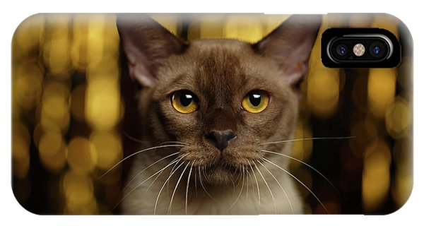 Closeup Portrait Burmese Cat On Happy New Year Background IPhone Case