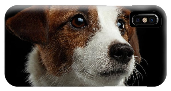 Dog iPhone X Case -  Closeup Portrait Of Jack Russell Terrier Dog On Black by Sergey Taran
