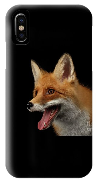 Closeup Portrait Of Smiled Red Fox Isolated On Black  IPhone Case