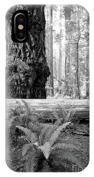 Coastal Redwoods  IPhone Case