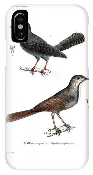 IPhone Case featuring the drawing Collared Palm Thrush And Chestnut-fronted Helmetshrike by J D L Franz Wagner