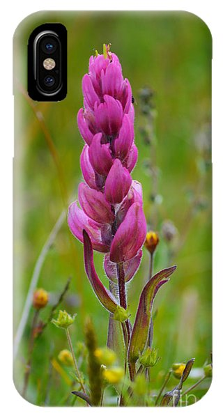 IPhone Case featuring the photograph Colorado Wildflower by Kate Avery