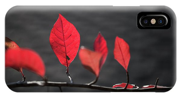Colorful Tree Leaves Changing Color For Auyumn,fall Season In Oc IPhone Case