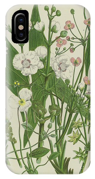 Flora iPhone Case - Common Star Fruit, Greater Water Plantain And Other Plants by English School