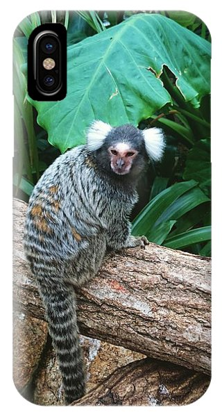 Commonmarmoset  IPhone Case