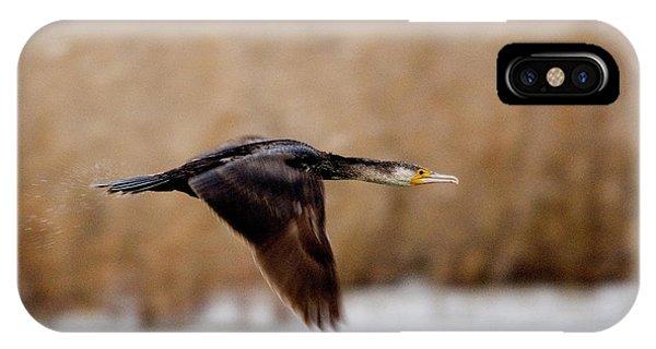 Cormorant In Flight IPhone Case