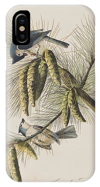 Titmouse iPhone Case - Crested Titmouse by John James Audubon