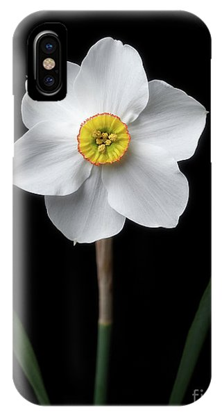 Daffodil 'cantabile' IPhone Case