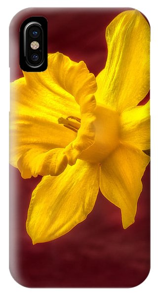 Daffodil Glow IPhone Case