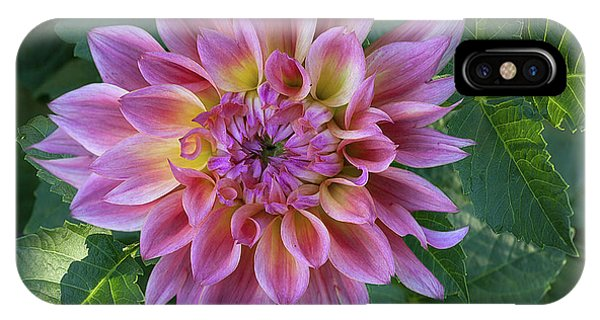 Dahlia 'ac Barney'' IPhone Case