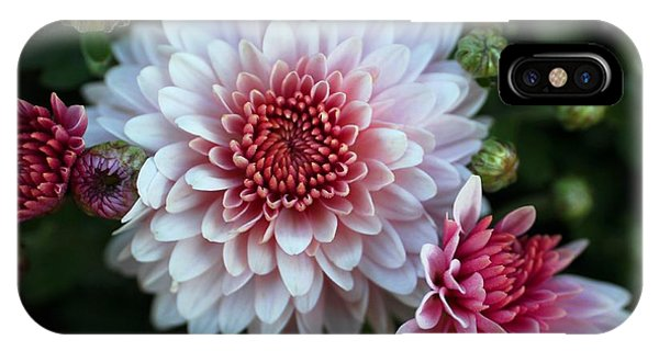 Dahlia Burst IPhone Case