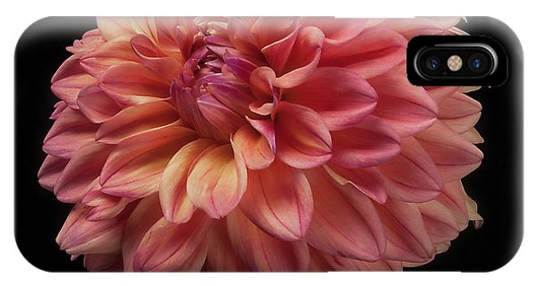 Dahlia 'ferncliff Copper' IPhone Case