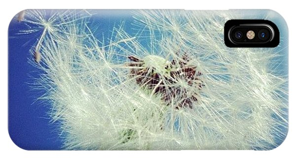 Blue iPhone Case - Dandelion And Blue Sky by Matthias Hauser