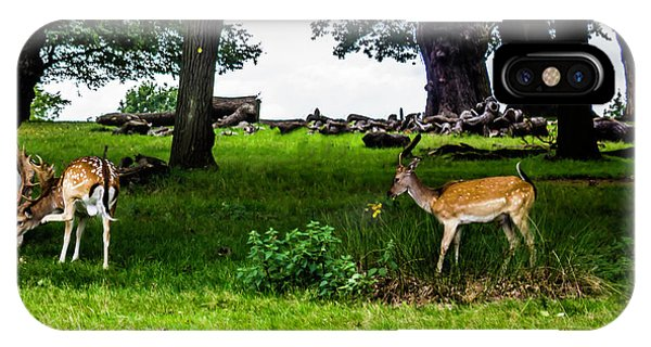 Deer In The Park IPhone Case