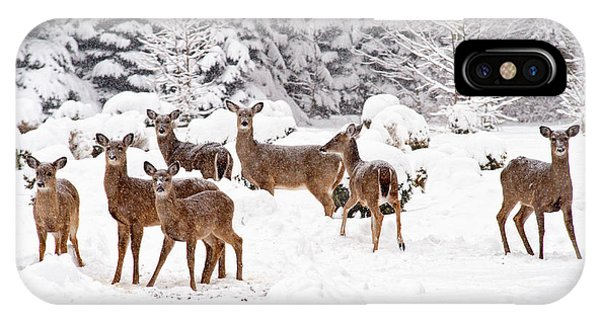 IPhone Case featuring the photograph Deer In The Snow by Angel Cher