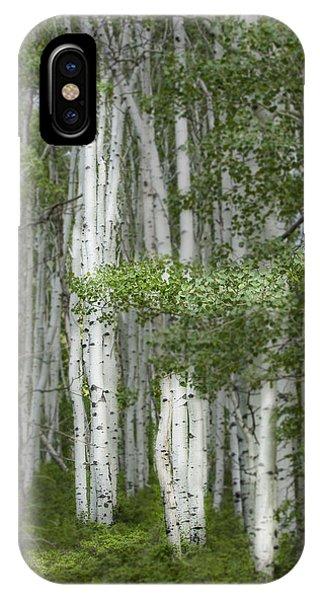 Delicate Aspens. Colorado IPhone Case