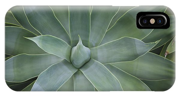 Detail Of An Agave Attenuata IPhone Case