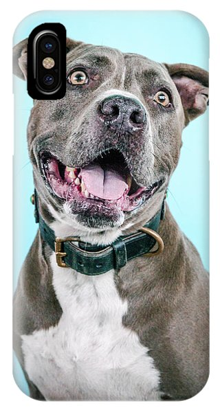 Pitbull iPhone Case - Diesel by Pit Bull Headshots by Headshots Melrose